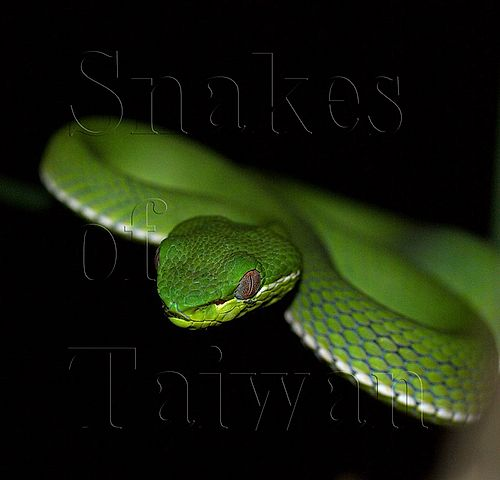 Snakes of Taiwan index image